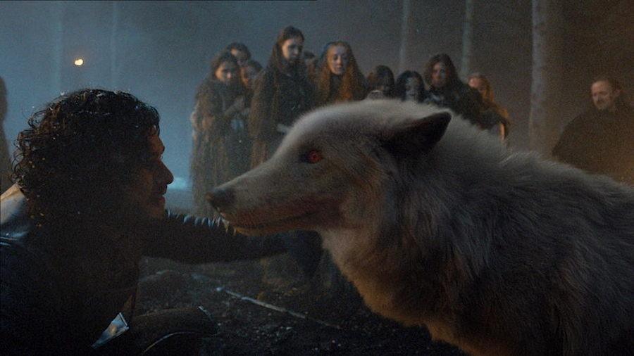 Dire wolf on Game of Thrones