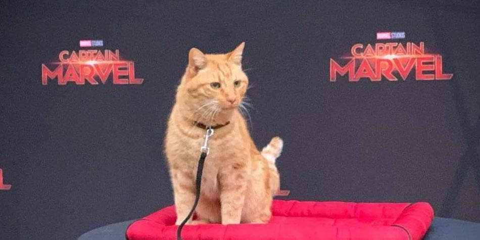 Goose-Reggie-Captain-Marvel-Cat